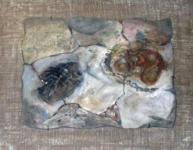 Shell Fossils