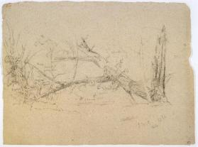 Study of a Chestnut Tree