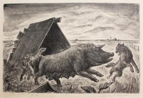 Coyotes Stealing Pig