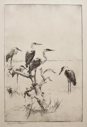 Herons at Rest