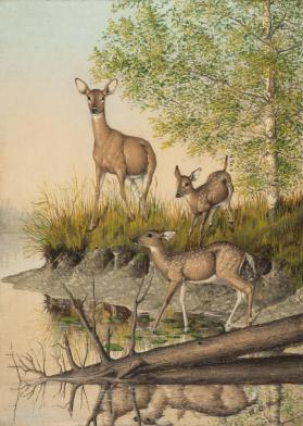 Three Deer on Woodhull Lake, New York