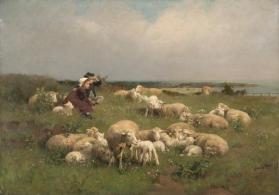 Sheep Pasture, Springtime