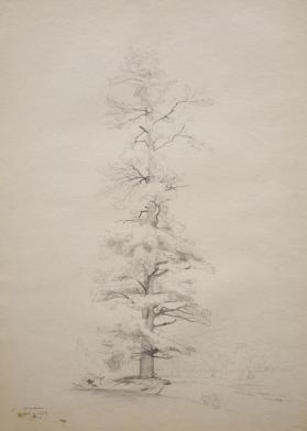 Tree Study, Shandaken, New Jersey