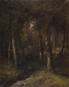 A View in the Woods