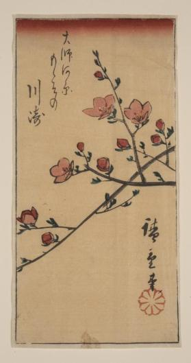 Flowering Prunus Branch