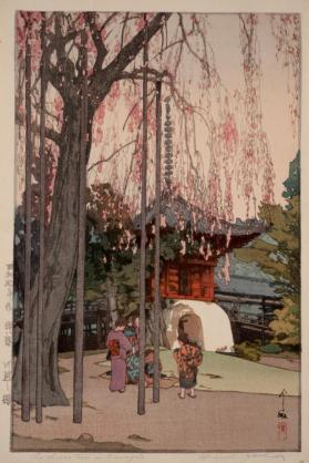 The Cherry Tree in Kawagoe
