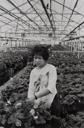 A Vietnamese Woman at the Baker Greenhouse