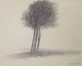 A Small Copse in a Field