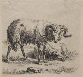 Animalia:  Ram and Ewe