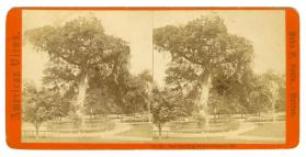 American Views: The Old Elm, Boston Common, 1867