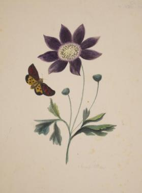 A Daisy and Butterfly